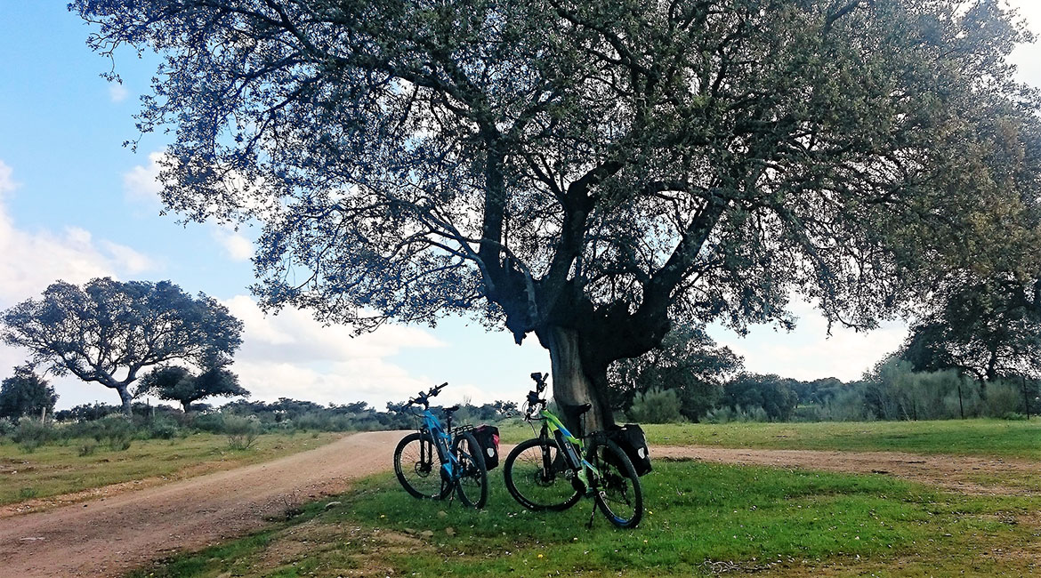 Camino de Santiago bike tour. Dehesa 2 | BIKING THROUGH SPAIN