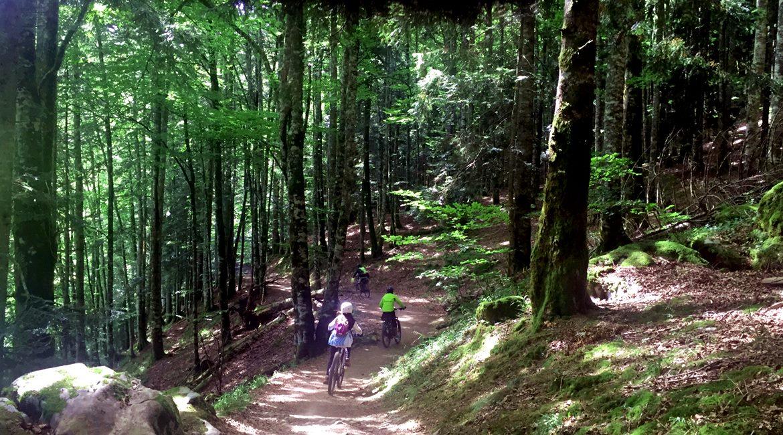 Irati forest on bike Irabia path 2| BIKING THROUGH SPAIN
