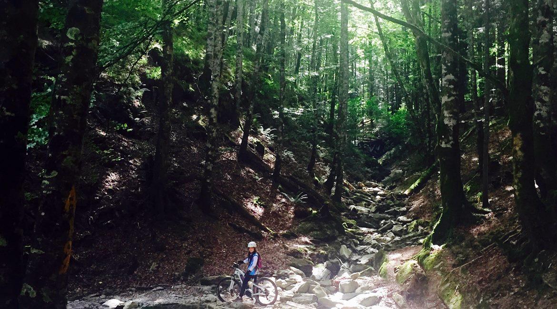 Bosque de Irati en BTT y cicloturismo sendero Irabia| BIKING THROUGH SPAIN