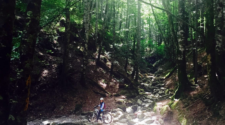 Irati forest on bike Irabia path| BIKING THROUGH SPAIN