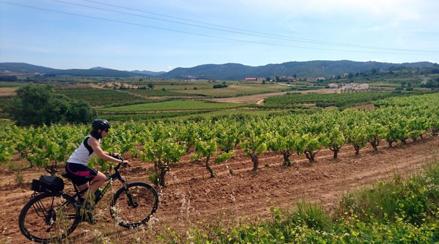 Penedes vineyards on bike. Subirats | BIKING THROUGH SPAIN